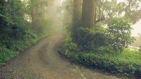 Misty road. Misty way in Japanese cedar forest Stock Image