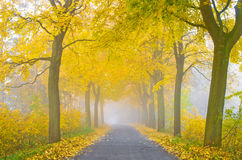 Misty road Royalty Free Stock Photography