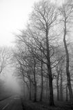 Misty Road. Lingering mist hinders visibility on the road Stock Photography