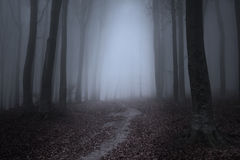Misty Road assustador na floresta fotografia de stock