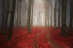 Misty Road assustador na floresta fotos de stock