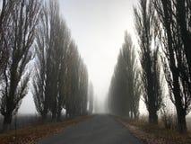 Misty Road assustador no campo imagem de stock