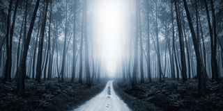 Misty Road spaventosa nella foresta Fotografie Stock