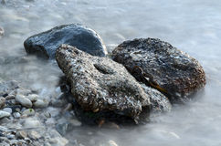 Misty Rocks and Seaweed. Rocks, pebbles and seaweed on the shoreline Royalty Free Stock Images