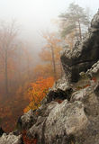 Misty rocks and trees in forest Stock Images