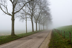 Misty row of leafless trees beside a country road Stock Image