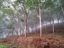 Misty. Rubber plantation from Sri Lanka Stock Photography