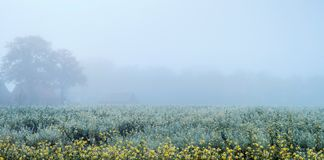 Misty rural landscape with yellow flowers some trees and farm. North Rhine-Westphalia, Germany royalty free stock photography