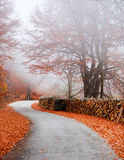 Misty rural road Royalty Free Stock Photography