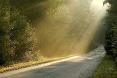 Misty rural road through the autumn forest Royalty Free Stock Photo