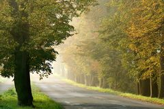 Misty rural road through the autumn trees Stock Photo
