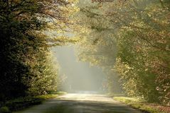 Misty rural road through autumn trees Royalty Free Stock Photo