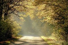 Misty rural road through autumn trees Royalty Free Stock Photography