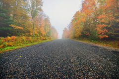Misty Rural Road Through Autumn Trees Royalty Free Stock Photos