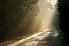 Misty rural road, sun rays through the trees royalty free stock photos