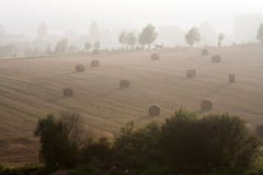 Misty rural scene Stock Photography