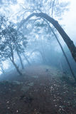 Misty scary forest  in fog Stock Images