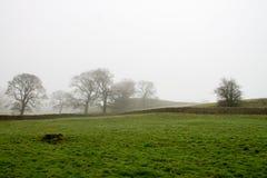 Misty Scenery en Wharfedale Imágenes de archivo libres de regalías