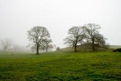 Misty Scenery i Wharfedale Royaltyfri Bild