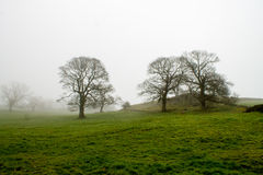 Misty Scenery in Wharfedale. Beautiful misty scenery and grey sky in Bolton Abbey, Wharfedale, North Yorkshire, UK Royalty Free Stock Image