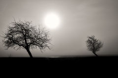 Misty silhouette of two trees Stock Images