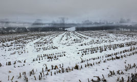 Misty snow covered empty corn field Stock Photo