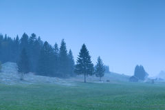Misty snowy morning on alpine meadows Stock Photography