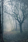 Misty spooky forest Stock Image