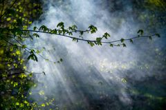 Misty spring dawn. Young leaves and mist smoke lit by sun stock images