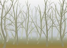 Misty spring forest Stock Photography