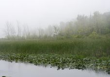 Misty spring landscape in the fog Royalty Free Stock Photos