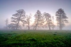 Misty spring landscape Stock Photography