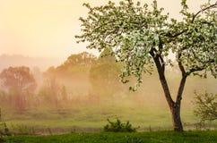 Misty Spring-ochtend royalty-vrije stock foto