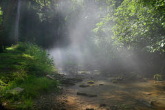 Misty Stream Royalty Free Stock Image