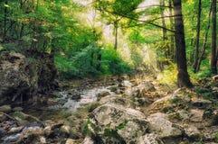 Misty stream woods. Stock Image