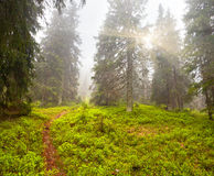 Misty summer morning Royalty Free Stock Photo