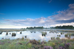 Misty summer morning over swamp Stock Image