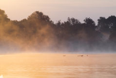 Misty summer morning on the river. Poland Royalty Free Stock Images