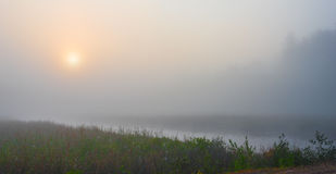 Misty summer morning sunrise on a marsh wetland. Brilliant & bright mid-summer sunrise on narrow passage of a lake.   Warm water & cooler air at daybreak create Royalty Free Stock Photo