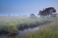 Misty summer morning on swamp Stock Photos