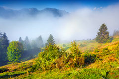 Misty summer morning in the Triglav national park Royalty Free Stock Images