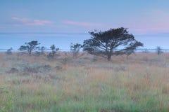 Misty summer sunrise on marsh Royalty Free Stock Photo
