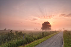 Misty summer sunrise over bike road Stock Photography