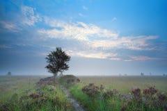 Misty summer sunrise over heatherland Royalty Free Stock Images