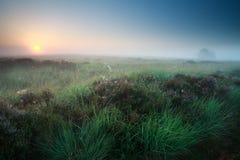 Misty Summer Sunrise Over Marsh With Heather Stock Image