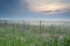 Misty summer sunrise over meadow Stock Photography