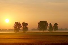 Misty summer sunrise with trees on a field Stock Image