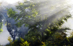 Misty Sunbeam on trees Stock Images