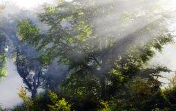 Misty Sunbeam on trees Stock Images