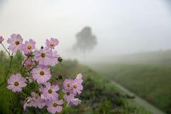 Misty Sunday ochtend Royalty-vrije Stock Fotografie